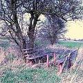 #ławka #drzewo #park