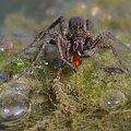 #owady #pająki #stawy