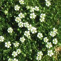 #Mech #Kwiaty #Biel