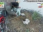 http://images44.fotosik.pl/136/5c1b7c62423ea989m.jpg