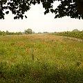 #maki #łąka #mazowieckie