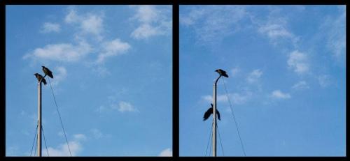 #ptaki #niebo #spadać #maszt