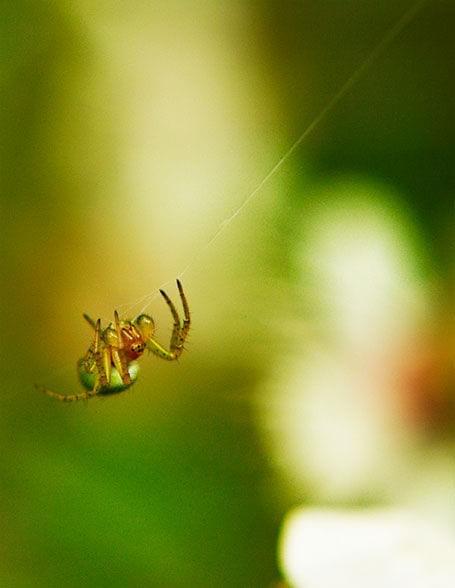 #pająk #nic #owad #WspinaćSię #makro