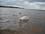 images44.fotosik.pl/152/8d0334f6e3d0c875m.jpg