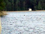 images44.fotosik.pl/152/a595a48dd7dcdc75m.jpg