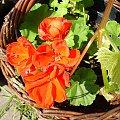 Begonia #ciepło #dojrzewanie #drzewka #działka #kwiatki #lato #macro #natura #begonia #ogrod #ogród #ogródek #owoce #OwoceNatury #piękno #plony #roslinnosc #roslinność #rosliny #rozkwit #wieś #wioska #wiosna #woda #zbiory