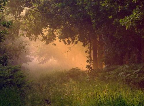 w moim magicznym lesie