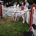 Osiołek #osioł #ssak #zwierzęta
