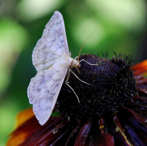Cma i rubekia #kwiaty #ogródek #owady #przyroda #natura