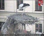 http://images44.fotosik.pl/181/194871e5a2e6af29m.jpg