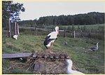 http://images44.fotosik.pl/188/39dc8ad3cf0dd55am.jpg
