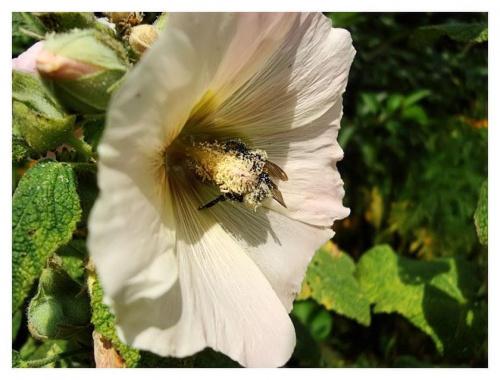 z archiwum: Oblepiona pyłkiem :)