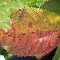 JEŚIEŃ #ogród #natura #rosliny #kwiatki #roslinność #roslinnosc #macro #piękno #działka #dojrzewanie #rozkwit #lato #wiosna #ciepło #owoce #drzewka #ogrod #zbiory #plony #OwoceNatury #wieś #wioska #ogródek #ogórek #ogór #woda