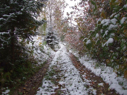 Pierwszy śnieg w OGW Droga do Wiatrogrodu 14.10.2009