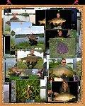 images44.fotosik.pl/223/94e95984a7295cadm.jpg