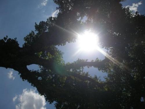 images44.fotosik.pl/226/b1e74f70f12bbbd9med.jpg