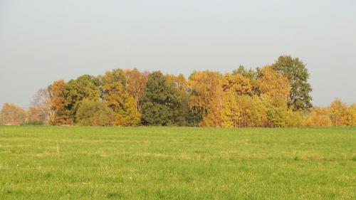 tak.. jesiennie ;)) #jesień #drzewa