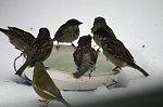 http://images44.fotosik.pl/246/d6c42998ba5acb91m.jpg