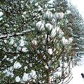 Po prostu prawdziwa zima! #zima #NadMorzem #śnieg #las