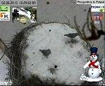 http://images44.fotosik.pl/257/1a9ed1e16708fa40m.jpg