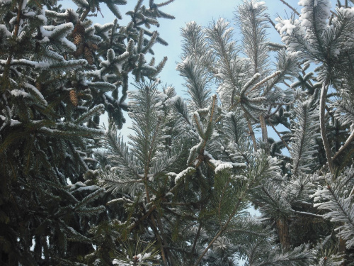 zimowo #zima #las