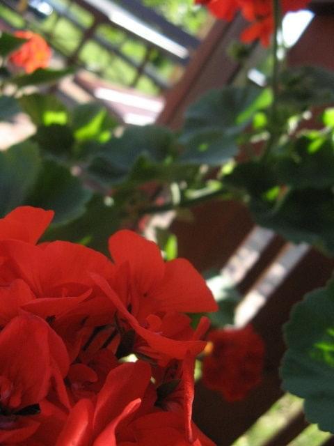 kwaiaty... #kwiat #kwiatek #roślina