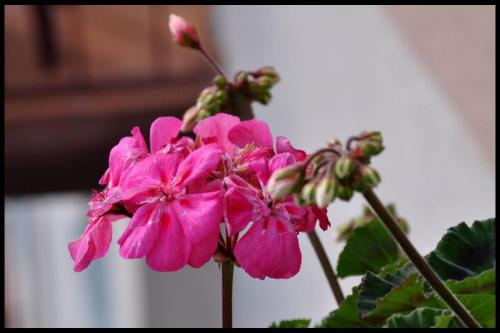 #wiosna #kwiaty #róż #różowe #lato #kwiat