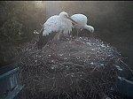 http://images44.fotosik.pl/313/313d19a42b984420m.jpg