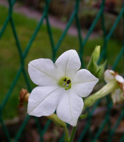 kwiatek ...;))