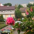 burza #balkon #burza #chmury #deszcz #kwiatek #osiedle