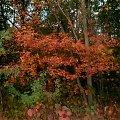 #drzewa #lasy #przyroda #liść #las #rośliny #natura #jesień