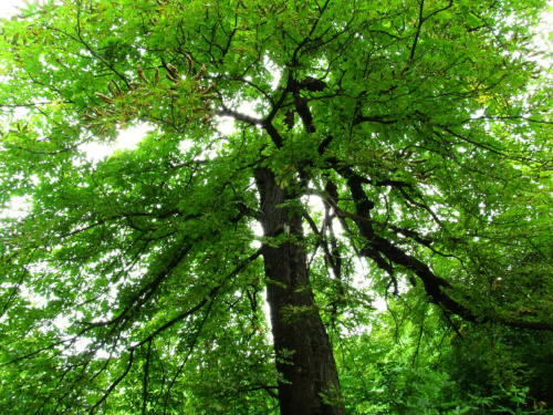 #DrzewoLas