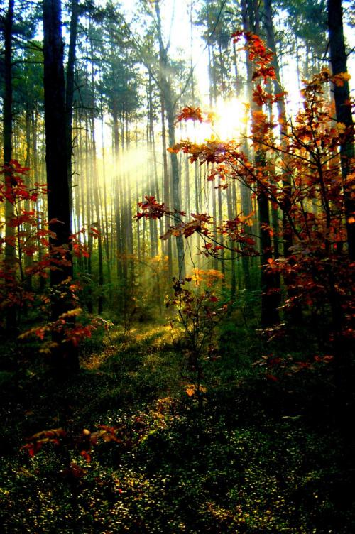 Jesienny poranek w lesie #las #jesień #poranek