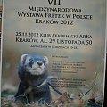 Kraków 25-11-2012 _ plakat #AKI #fretka #fretki #gwiazdor #Kraków #nagroda #wystawa
