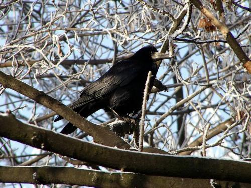 #zima #ptak #natura