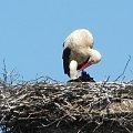 Gniazdo bocianów w Podczerwonem /powiat nowotarski/ #bociany #ptaki #wiosna