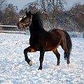 #Arkadia #Boy #KAma #konie #PAlant #stadnina #ślązaki #WielkaLipa