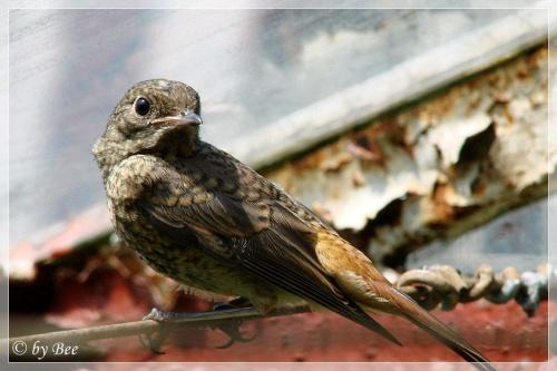 #działka #lato #ogród #ptaki