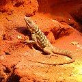 #zwierzęta #dzikie #lądowe #wodne #animals