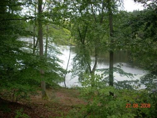 Jezioro pod bukami.