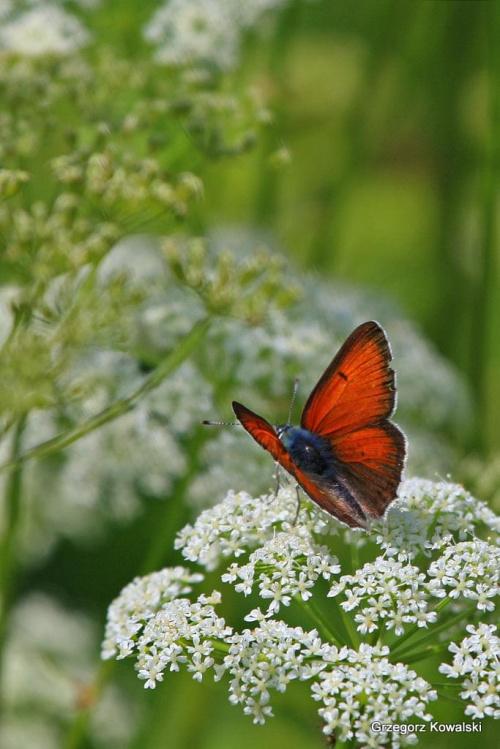 #motyl #przyroda #owady
