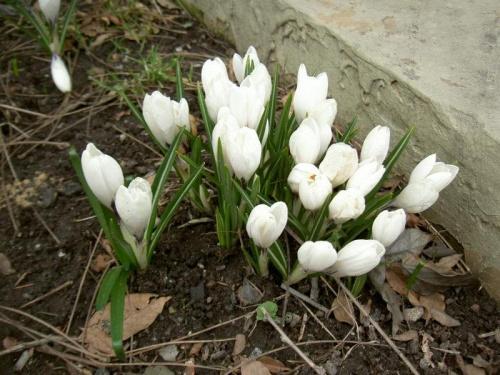 wiosna nadeszła...... #wiosna