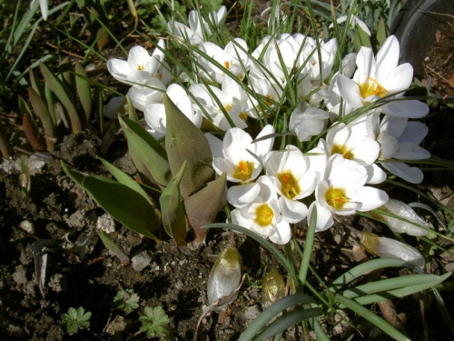 Wiosna nadeszła............ #wiosna